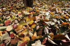 Fondo colorido hecho de las hojas de otoño caidas Fotografía de archivo libre de regalías