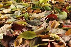 Fondo colorido hecho de las hojas de otoño caidas Imágenes de archivo libres de regalías