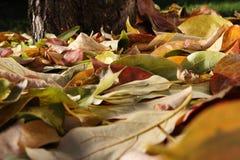 Fondo colorido hecho de las hojas de otoño caidas Foto de archivo libre de regalías