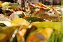 Fondo colorido hecho de las hojas de otoño caidas Fotos de archivo