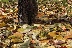 Fondo colorido hecho de las hojas de otoño caidas Imagen de archivo libre de regalías