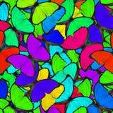 Fondo colorido hecho de las mariposas azules de Morpho en la tolerancia Fotografía de archivo