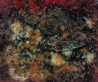 Fondo Colourful dell'immagine di progresso di arte moderna Fotografie Stock