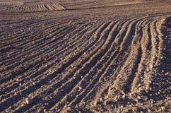 Fondo coltivato del suolo del campo dell'azienda agricola Fotografia Stock Libera da Diritti