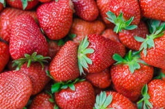 Fondo completo del marco de las fresas perfectas maduras frescas Fotografía de archivo