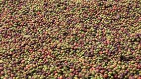 Fondo completo del marco de los granos de café crudos almacen de video