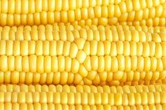 Fondo completo della struttura del primo piano del cereale Immagini Stock Libere da Diritti