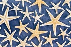 Fondo completo della struttura delle stelle marine secche Fotografie Stock Libere da Diritti