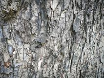 Fondo completo della struttura di struttura della corteccia di albero fotografia stock libera da diritti