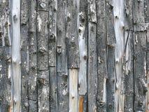 Fondo completo della struttura della parete della plancia della corteccia di albero fotografia stock libera da diritti