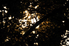 Fondo composto di sole di tramonto che splende attraverso le foglie ed i rami immagini stock libere da diritti