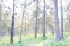 Fondo conífero borroso del bosque Fotografía de archivo