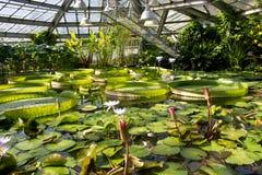 Fondo con differenti specie di pianta acquatica Ninfee e Victoria Amazonica in giardino botanico Fotografia Stock