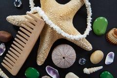 Fondo con diversas cáscaras y las estrellas cinco-acentuadas del mar Fotografía de archivo libre de regalías