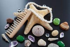 Fondo con diversas cáscaras y las estrellas cinco-acentuadas del mar Imágenes de archivo libres de regalías