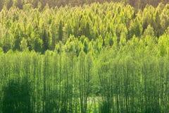Fondo con el bosque verde de la primavera Imágenes de archivo libres de regalías