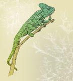 Fondo con el camaleón Imagenes de archivo