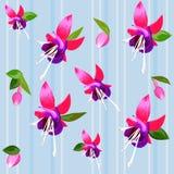 Fondo con el fucsia de la flor Imagen de archivo
