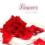 Fondo con el marco rojo de Rose y de la vendimia fotografía de archivo
