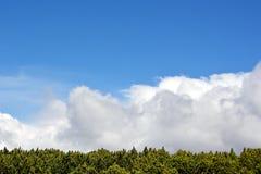 Fondo con el pino y el cielo azul fotos de archivo libres de regalías