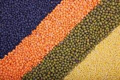 Fondo con filas de cereales Imagen de archivo
