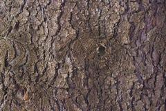 Fondo con Gray Wood Bark Imagen de archivo libre de regalías