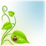 Fondo con hojas del verde y una mariquita Imagen de archivo