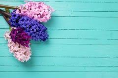 Fondo con hyacynths de las flores frescas Imagen de archivo libre de regalías