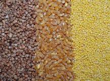 Fondo con i cereali grano saraceno, grano, miglio fotografia stock