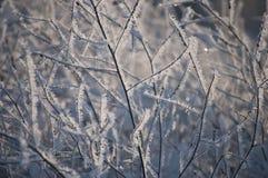 Fondo con i cristalli del gelo al sole Immagini Stock