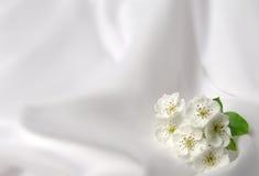 Fondo con i fiori Immagine Stock Libera da Diritti