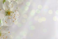 Fondo con i fiori Fotografie Stock