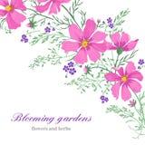 Fondo con i fiori su un fondo bianco Immagini Stock Libere da Diritti