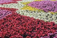 Fondo con i lotti dei fiori variopinti Immagine Stock
