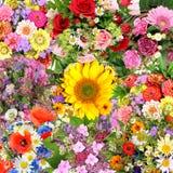 Fondo con i mazzi del fiore Immagine Stock