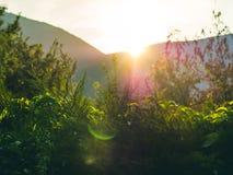 Fondo con i rami di albero al tramonto Fotografia Stock