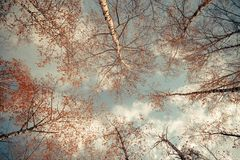 Fondo con i rami di albero contro il cielo Immagine Stock Libera da Diritti