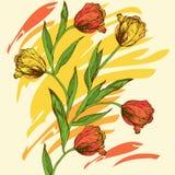 Fondo con i tulipani e la pittura di spruzzo colorata Fotografia Stock