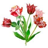 Fondo con i tulipani e roses-02 Fotografie Stock