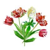 Fondo con i tulipani e roses-03 Fotografia Stock Libera da Diritti