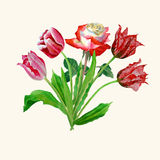 Fondo con i tulipani e roses-05 Immagini Stock