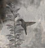 Fondo con il colibrì Fotografia Stock