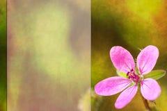 Fondo con il fiore rosa Immagini Stock Libere da Diritti