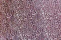 Fondo con il modello della pelliccia dell'animale selvatico Fotografia Stock Libera da Diritti