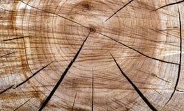 Fondo con il taglio di legno di sezione trasversale dalla sega fotografia stock libera da diritti