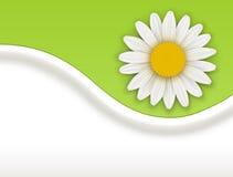 Fondo con la flor blanca libre illustration