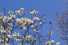Fondo con la flor blanca en el cielo azul Foto de archivo libre de regalías