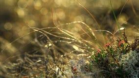 Fondo con la flora alpina en la luz del sol Foto de archivo