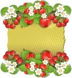 Fondo con la fresa Foto de archivo libre de regalías