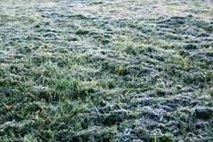 Fondo con la hierba en la helada de la mañana imagenes de archivo
